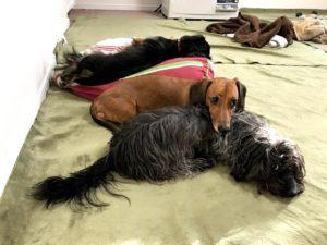 ゆきだるまのお家と犬